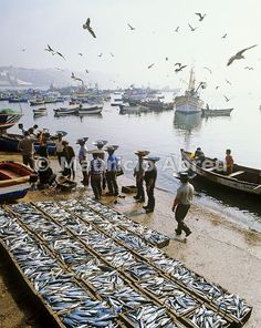#Sines, #Alentejo. Unloading the fish, the catch of the day.