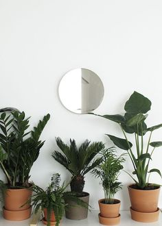 Picking the same colour or style of plant pot for all of your house plants makes for a more sleek unified look, very trendy.