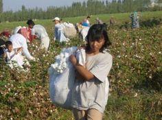 Europe blocks Uzbek cotton harvested with child labour