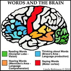 Linda Robinson: Our Words: See Hear Think Say Different parts of the brain are used when interacting with language. Speech Pathology, Speech Language Pathology, Speech And Language, Speech Therapy, Aphasia Therapy, Brain Anatomy, Anatomy And Physiology, Brain Based Learning, Brain Science