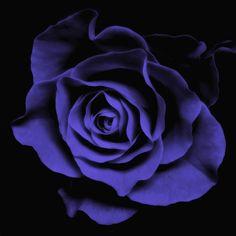 art of blue flowers - Google Search