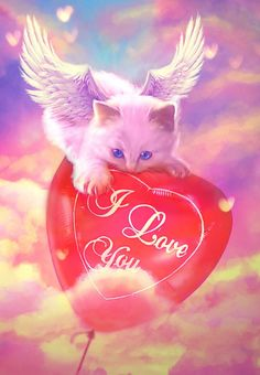 Cupid by MariLucia on DeviantArt Gato Angel, Pet Loss Quotes, Animals And Pets, Cute Animals, Cat Wallpaper, Pretty Wallpapers, Rainbow Bridge, Pet Memorials, Love Images