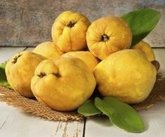 Proven health benefits of Quince There you need to know. In addition, there are quince beneficial properties to prevent and combat various diseases. Then check the benefits of quince Hay for health. Would you like to know the benefits of quince there? Quince Fruit, Healthy Fruits, Healthy Recipes, Healthy Food, Health Benefits, Health Tips, Pyrus, Natural Treatments, Still Life