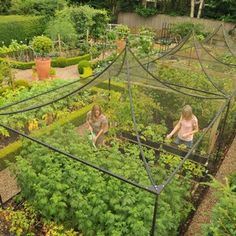 Peak Roof Heavy Duty Steel Decorative Fruit Cage - Harrod Horticultural (UK)