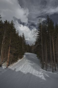 A beautiful cross-country ski slope winding through the tall trees in the Italian Alps