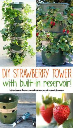 diyncraftz:   How To Build A Strawberry Tower With... - DIY n Craftz