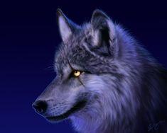Imagem de perfil de lobo ao anoitecer                                                                                                                                                                                 Mais