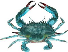 Blue Crab Watercolor Canvas Print by Amber Marine Watercolor Canvas, Watercolor Paintings, Watercolors, Ocean Paintings, Crab Painting, Painting Art, Crab Illustration, Crab Tattoo, Framed Art Prints