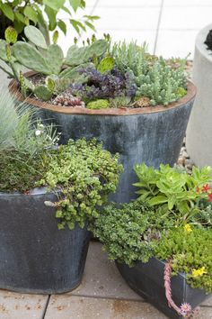 love these mixed pots, especially set around pea gravel terrace or patio