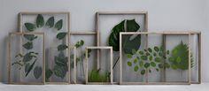 encadrée feuilles de verre sur le verre