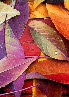 Renk cümbüşü