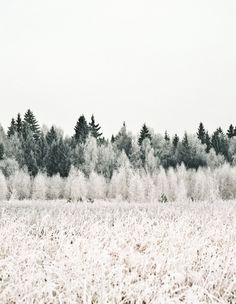 Frost | winter . Winter . hiver | @ Minna So |[ LavHa.com ]
