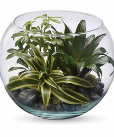 It is to be said that Nature's beauty is a world of art. Indoor green plants allow us to live with that art on a daily basis. This clear glass bubble bowl with a selection of ornamental plants creates an oasis of tranquility, and would make an excellent office gift. #CityLineFlorist