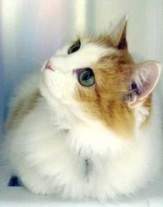 Love Cat | Cutest Paw