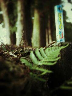 114- @ayumi_2192 森とたたずむ。 #30jc