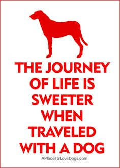 The Journey Of Life Is Sweeter When Traveled With A Dog #dogquote #dogtravel