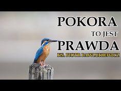 Piotr Pawlukiewicz - Pokora to jest prawda Youtube, Catholic, Youtubers, Youtube Movies