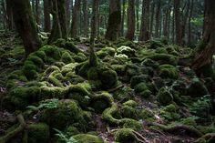 Aokigahara forest - Reiko Nakamura