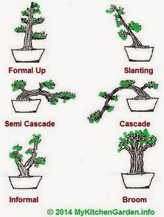 Bougainvillea Bonsai Training and Shaping