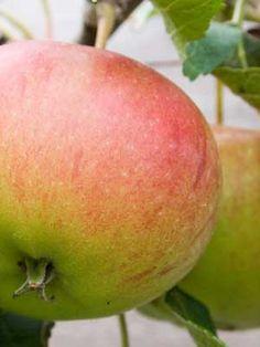 Apple grow guide from growveg.com