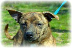 Meet Sebastian-2b34 a Petfinder adoptable Dachshund Dog | Wolfe City, TX | ~~~~~~~~~~~~~~~~~~~~~~~~~~~~~~~~~~~~~~~~~~~~~~~~~~~~~~~   The Frank Barchard Memorial Animal...