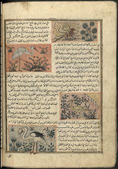 Adjâ'ib al-makhlûqât wa gharâ'ib al mawdjûdât, by Zakariyyā ibn Muḥammad ibn Maḥmūd al Qazwīnī, (ca.1203-1283), Ms 1130 Bordeau, f166