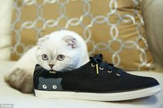 Purrfect: Taylor Swift's new kitten Olivia stars in an advert for Keds to promote the star's latest design collaboration with the shoe brand, the $55 Champion Sneaky Cat sneaker (pictured)