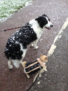 Boys out in the first snow
