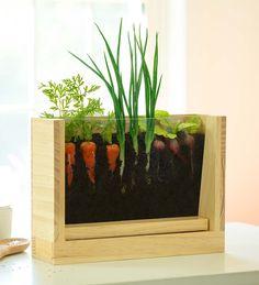Pulling Hair Out, Growing Carrots, Growing Vegetables, Light Up Tree, Garden Tool Set, Grow Kit, Natural Curiosities, Garden Journal, Garden Planters
