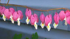 A bleeding heart that is in our garden. Garden Art, Garden Design, Fine Art America, Lisa, Photos, Pictures, Wall Art, Artwork, Artist