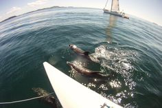 Bay of Islands Tour: Swim with Dolphins in New Zealand