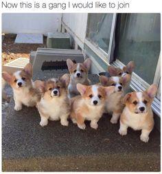 Finally gang for me! 😍