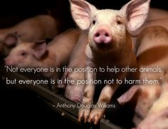 My heart aches at the thought of how farm animals are treated-tortured! How about we just be humane?!?!