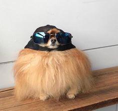 funny dog memes puppies * funny dog memes & funny dog memes hilarious & funny dog memes humor & funny dog memes videos & funny dog memes puppies & funny dog memes with captions & funny dog memes hilarious laughing & funny dog memes funniest animals Animal Jokes, Funny Animal Memes, Dog Memes, Funny Animal Pictures, Funny Dogs, Funny Chihuahua, Baby Chihuahua, Cute Puppies, Cute Dogs