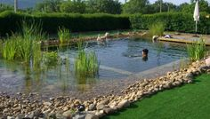 Natural swimming pool pond photo gallery design for Piscinas ecologicas