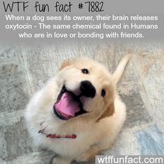 35 WTF Fun Facts For Your Brain to Absorb
