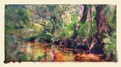 Leitner Creek Bonita Springs, Florida a tributary to Imperial River.  SUP Paddleboard secret trail in #swfl