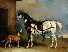 'Lofty', a Skewbald (extreme splash) Carriage Horse, with a Greyhound, by John E. Ferneley I Mediums Of Art, Greyhound Art, Horse Portrait, Pencil Portrait, Painted Pony, Horses And Dogs, Horse Drawings, All The Pretty Horses, Art Uk