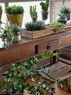 Houseplants: what are the ideal species, Potted Plants, Indoor Plants, Deco Cactus, Plantas Indoor, The Constant Gardener, Botanical Interior, Inside Garden, Growing Greens, Plantar