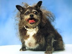 Funny Ugly Dogs The Ugly Truth About Dogs was always from human to be funny thing for them , And Funny photo-images! Ugly Cat, Ugly Dogs, Ugly Animals, Cute Animals, Ugliest Animals, World Ugliest Dog, Ugliest Dog Contest, Love My Dog, Fat Dogs