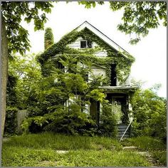 Feral Houses. Photographs of abandoned houses in Detroit that are being reclaimed by their natural surroundings. Photographs by Jim Griffioen from his blog Sweet Juniper!