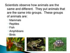"""This is a PowerPoint about Mammals.  I use this PowerPoint first when I teach """"Animal Groups"""".  This PowerPoint describes the characteristics of mammals as well as introduces students to animal groups.  Each PowerPoint has slides at the end that allows the students to guess the tallest mammal, fastest mammal, slowest mammal, etc."""
