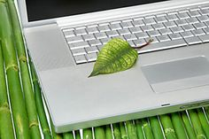 10 Easy Ways to Green Your Home Office