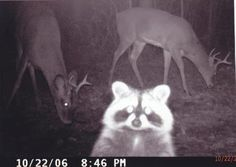Funny Trail Camera Pictures