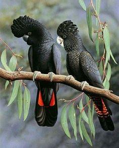 #wow #wowww #Amazing #Beautiful #Birds Pretty Birds, Beautiful Birds, Animals Beautiful, Cute Birds, Beautiful Pictures, Exotic Birds, Colorful Birds, Exotic Animals, Bird Pictures