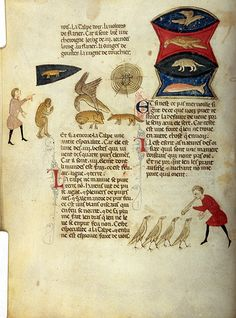 Bestiary, MS M.459 fol. 9v - Images from Medieval and Renaissance Manuscripts - The Morgan Library & Museum