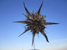 Ufo-Flower