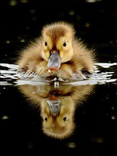 Lovely Duckling <3