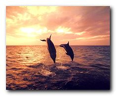 Jazz up your living space with this pair of dolphins jumping in ocean and a beautiful sunset view art print poster. This inviting and energizing wall poster is surely add style and more color to your home. It will be a great addition for any home decor and ensures high quality with perfect color accuracy. Make your order today and enjoy your surroundings.
