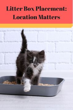 When my son and his college roommates were taking care of a friend's cat, the litter box ended up in a bathtub in their home. Not surprisingly, this did not work out very well. What are the best practices to follow for litter box placement? According to animalplanet.com, a litter box should be located where…